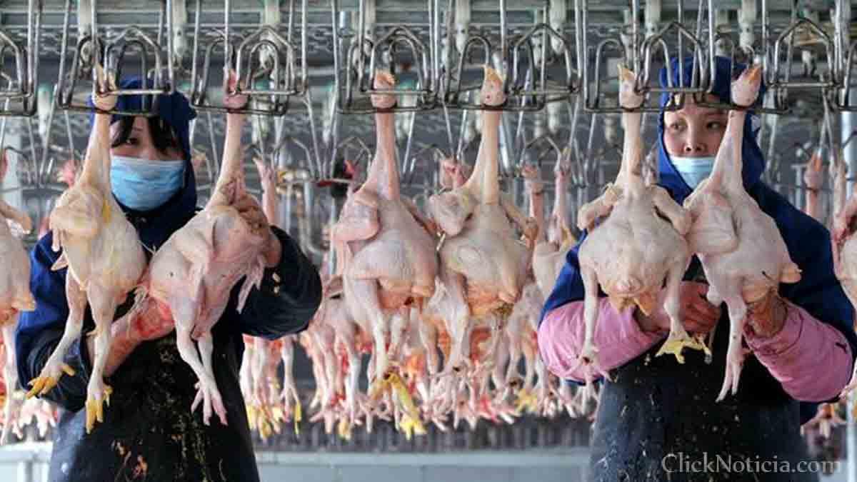 Se registra el primer caso de gripe aviar H10N3 en China